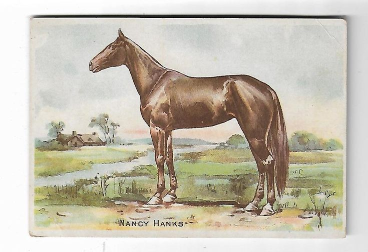 Old Trade Card Guernsey Cattle & Horse Powder AW Wright Phila PA Nancy Hanks