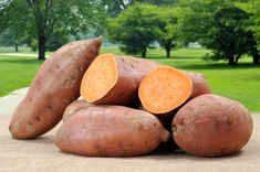 Live Science - Sweet potato facts