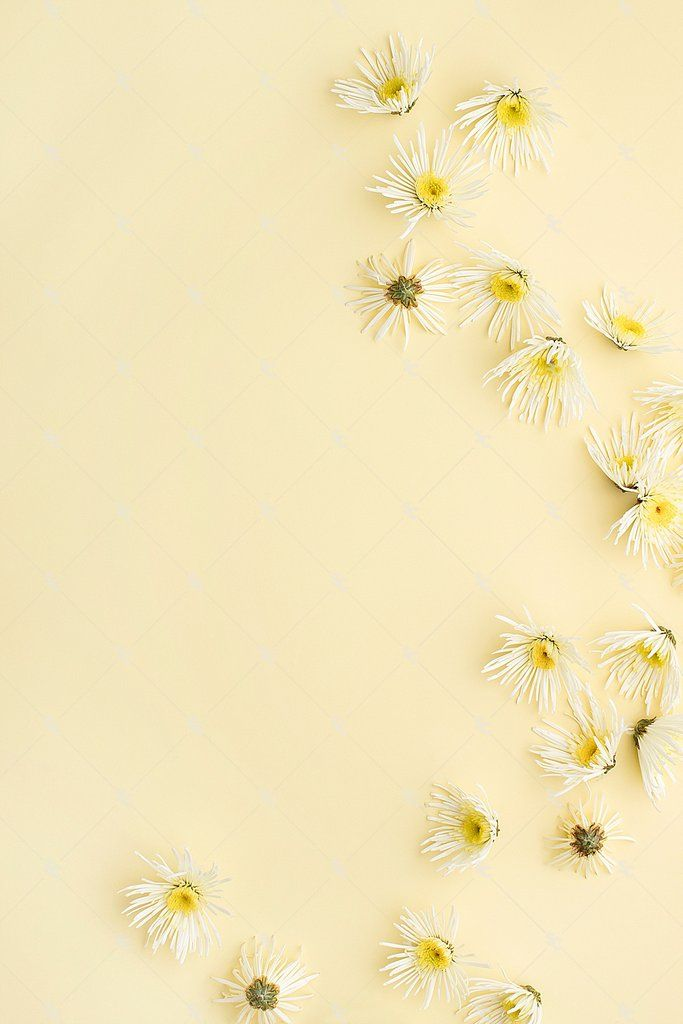 This Image Contains White Florals On A Soft Yellow Background Yellow Aesthetic Pastel Yellow Background Flower Background Wallpaper