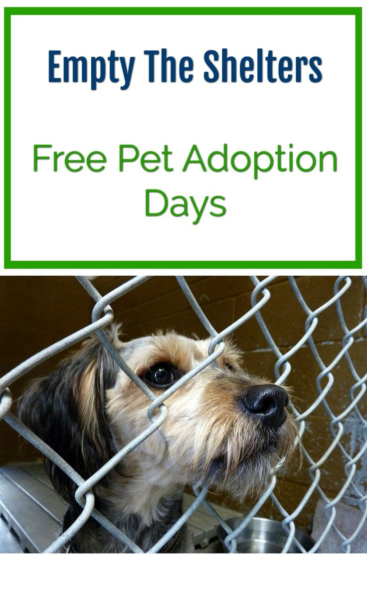 Empty the shelters - free pet adoption days. Cat and dog adoption days.