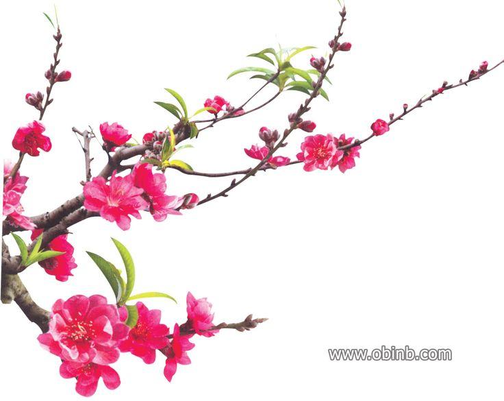 96 best images about Floral PNG on Pinterest | Floral ...