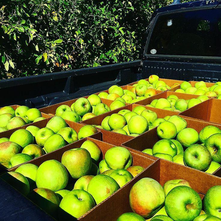 #stepporchards #apple #gypsyjuice #raw #juice #mountains #truckus #charlotte #local #farmersmarkrt #noda #waxhaw