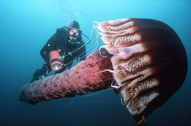 Wonders of the sea: Fascinating pictures from mesmerising collection of photos…