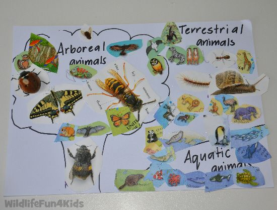 17 Best images about Zoology on Pinterest | Homeschool ...
