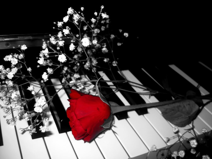 35 best Roses Pianos images on Pinterest | Beautiful ...