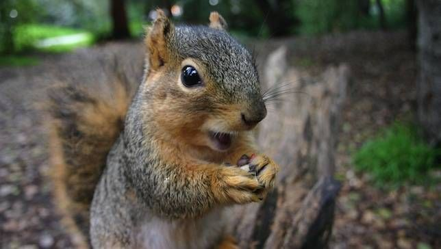 January 21st is Squirrel Appreciation Day! Check out these 21 fun facts about this opportunistic rodent.