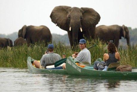 Immunization requirements for safari travel.
