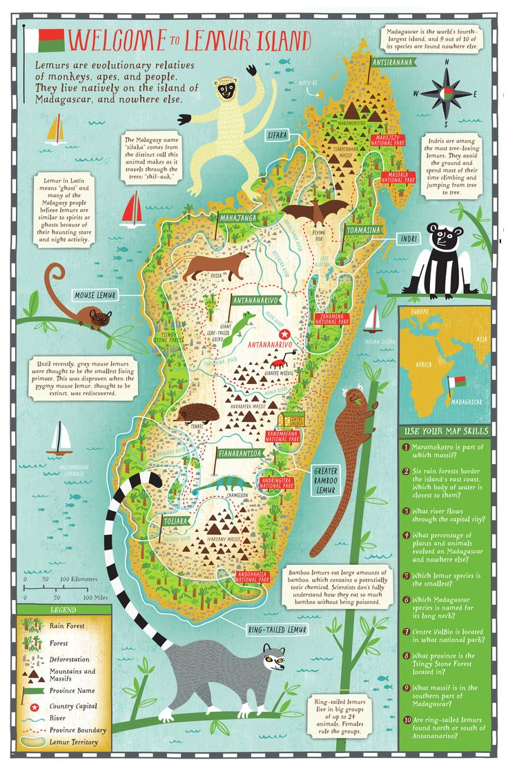 """Inspire lemur learning in your classroom with the """"Island of Lemurs: Madagascar"""" Educator Guide by Scholastic!"""