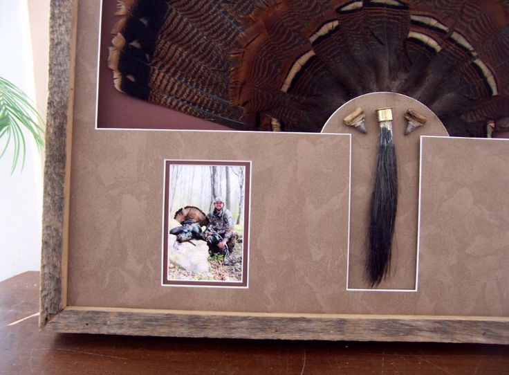 Custom Barn Wood Framed Turkey Tail Mount Hunting