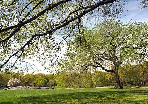 Central Park's North Meadow