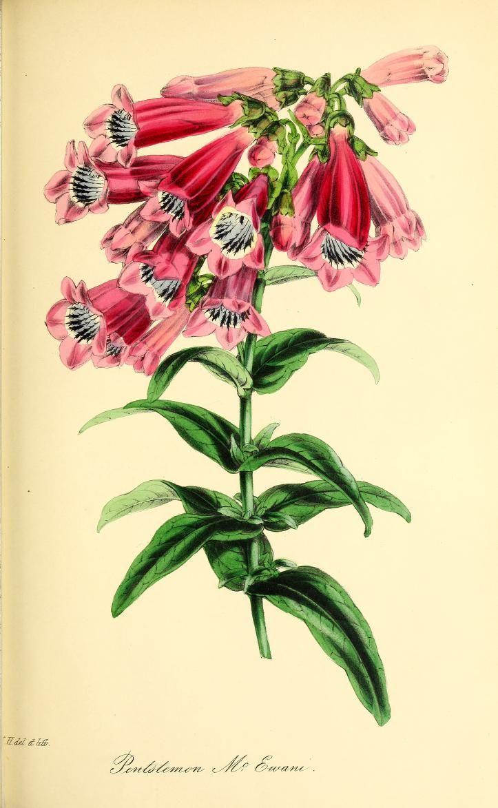 v14 magazine of botany heritage library