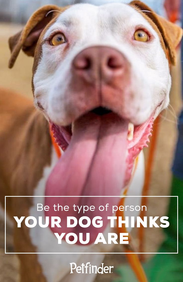 How do you adopt an animal through Petfinder?