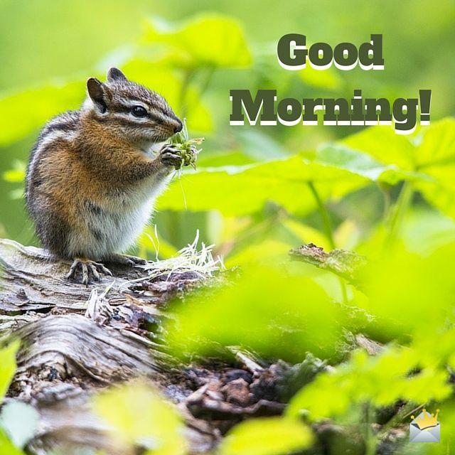 15 besten good morning kitty bilder auf pinterest guten morgen niedliche k tzchen und guten. Black Bedroom Furniture Sets. Home Design Ideas