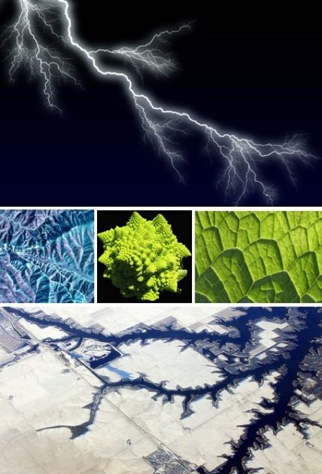 Fractals are purely a wonder – too irregular for Euclidean geometry; iterative and recursive and seemingly infinite. They turn up in food and germs, plants and animals, mountains and water and sky