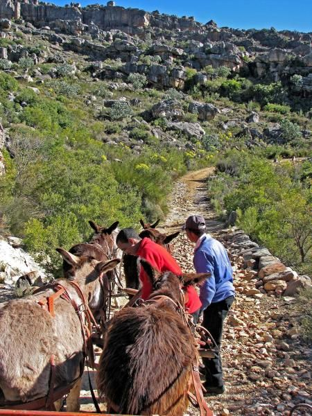 Donkey Trail in the Pakhuis Mountains We started our Flower Tour of Namakwaland in South Africa at Clanwilliam.