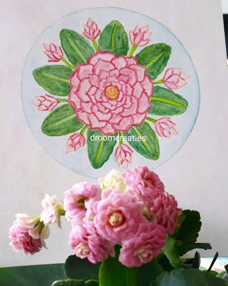 Kalanchoe flower made with aquarel pencils   #mandala #mandalasharing #lovemandalas #loveflowers #kalanchoe #flower #aquarelpainting #aquarel #aquarelart #watercolorart #watercolor #watercolour #botanical #botanicalart #drawing #droomcreaties