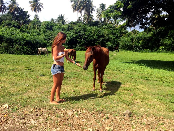 Wild horses in Vieques, Puerto Rico Nature lover, palms, travel, island