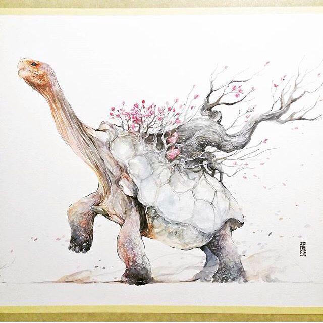 tortoise drawing for pinterest - photo #35
