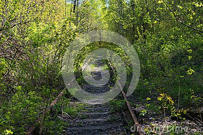 Abandoned railroad in the woods as a symbol of victory of nature over man