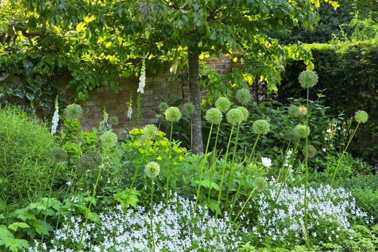 Charlotte Rowe Garden