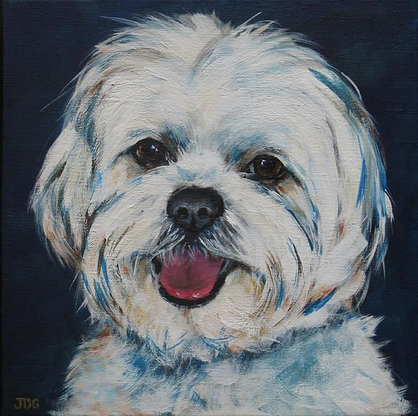 maltese painting 17 best images about my maltese on pinterest coton de 1701