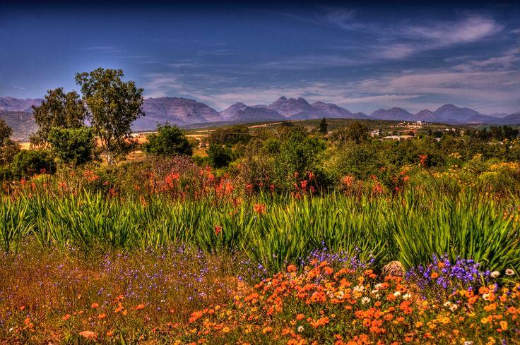 Namaqualand Landscape