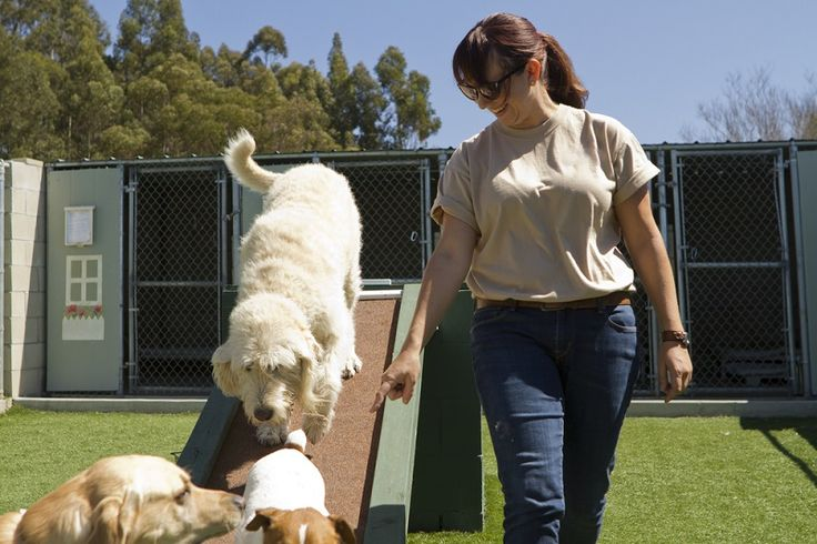 How to Be Careful While Hiring Professional Dog Minding Services? #dogMinding #DogSitting