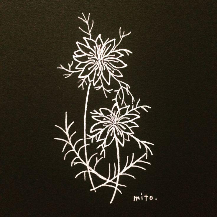 ニゲラの記憶スケッチ。 花の名前を覚えることは、 きっと、詩を覚えることに似ているよ。#ニゲラ