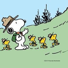 beagle scout - Google Search
