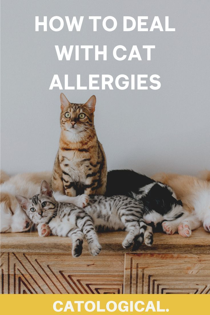Benadryl For Cats How To Deal With Cat Allergies In 2020 Cat Allergies Cat Problems Cats