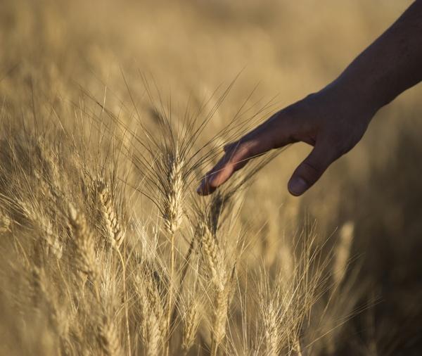 Summer Fields by Katerina Magazioti, via Behance