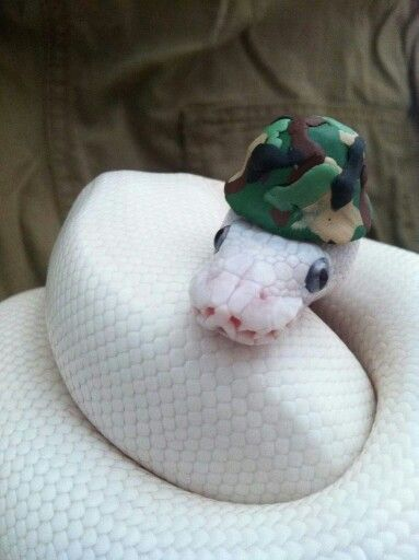 Snake with hat