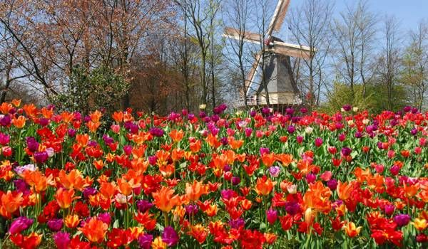 Come to Keukenhof, the world's most beautiful spring garden. In addition to over 32 hectares of flowers, the spring garden offers 30 inspiring flower shows, 7 amazing inspirational gardens and 100 wonderful works of art. Keukenhof is world-famous, truly unique, and has for over 60 years provided a wonderful decor to the most beautiful photographs.