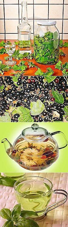 травы и чаи | Рецепты простой и вкусной еды на Постиле