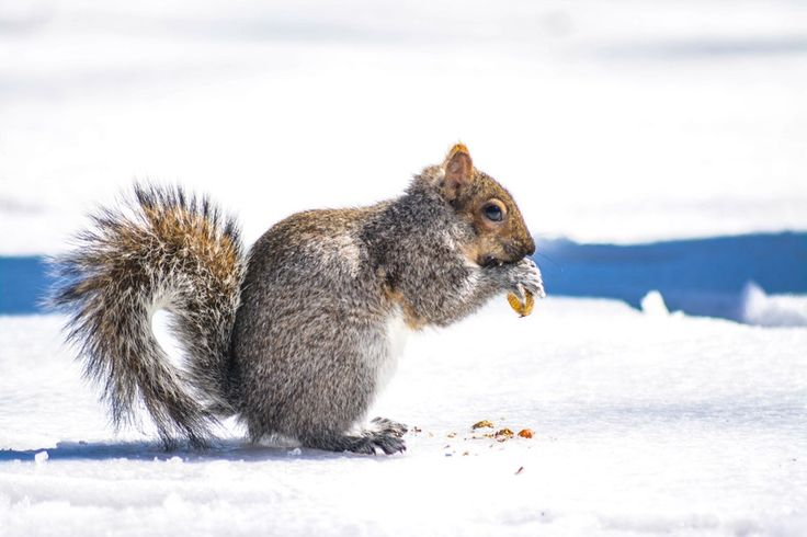 Nuts and a squirrel
