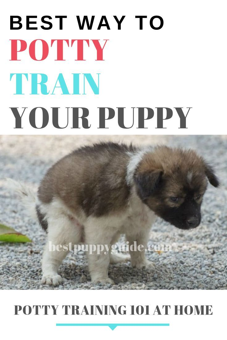 Click The Link To Learn More About Dog Training For Obedience