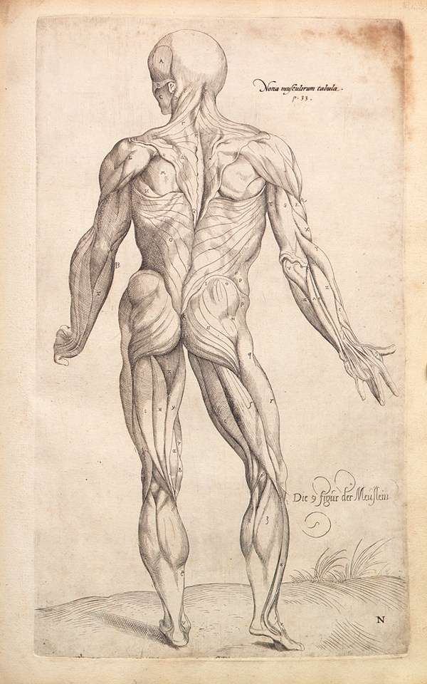 'De Humani Corporis Fabrica' - Andreas Vesalius, 1543 - #Anatomy #Sketch