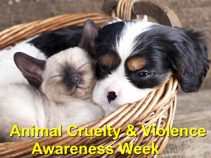 Animal Cruelty And Violence Awareness Week http://localvalue.vet/wp-content/uploads/2017/03/Animal-Cruelty-And-Violence-Awareness-Week.jpg Dedicating 30 days of April to Animal Cruelty and Violence Awareness   http://localvalue.vet/social-media/animal-cruelty-and-violence-awareness-week/