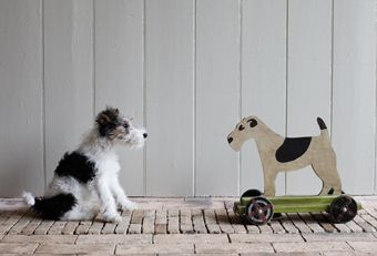 Plum & Ashby's gorgeous little fox terrier Bertie with friend ~ lovely photo!