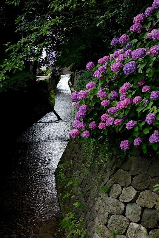 梅雨にいったらアジサイも綺麗かも。金澤コンシェルジュ通信: 西外惣構 紫陽花図
