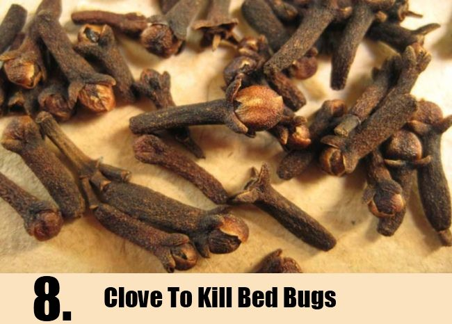 8 Home Remedies To Kill Bed Bugs | http://www.searchhomeremedy.com/home-remedies-to-kill-bed-bugs/