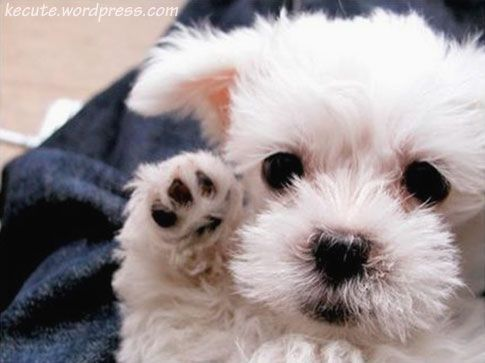 Cute: High Five, Cute Baby, Little Puppies, Dogs, Baby Animal, Bye Bye, Malt Puppies, Fluffy Puppies, Baby Puppies