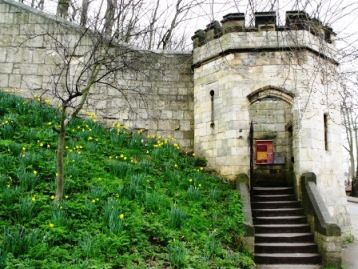 things to do in York England - walk around the York City Walls - beautiful when the daffodils are out, especially!