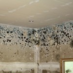 Before you grab your yellow latex gloves, bottle of cleaning solution and bucket full of water, take a moment to review this list of things you should not do when cleaning up mold.: Advanced Cleaning, Books Worth, Latex, Household Tips, Cleaning Service, Window Cleaning, Cleaning Tips