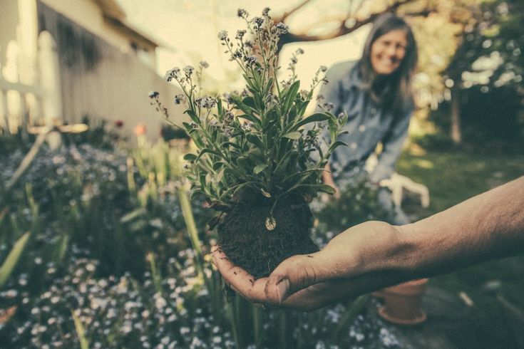 National Botanic Garden of Wales win funding for initiative project that promotes green living, Welsh horticulture and pushes conservation efforts. Find out more in our dedicated blog.
