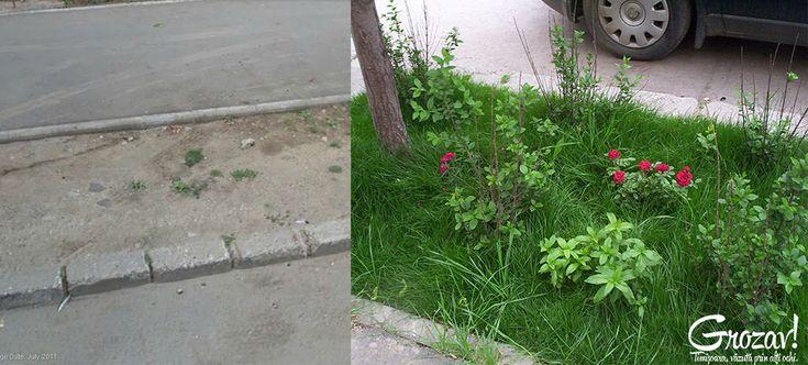 Iarba Verde de Acasa - Despre oameni cu initiativa din jurul nostru.