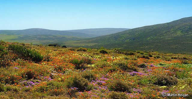 There are more bulb flora here than in any other arid region on earth.
