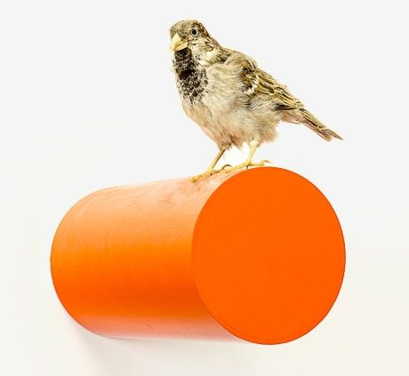 'Elmer Keith' (taxidermy sparrow work) by Michael Parekowhai.