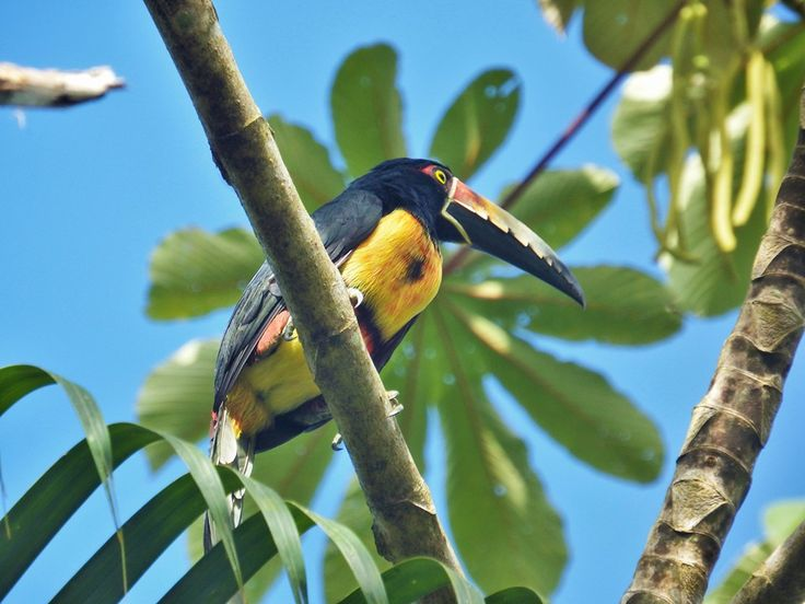 Do you know what type of bird this is? Spotted at our hub in Jalova. #costarica #birding