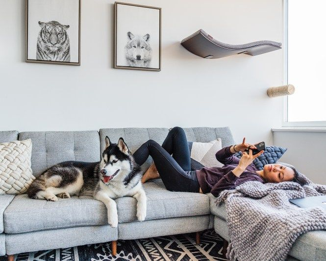 My Pet Friendly Living Room Sibe Life Pet Friendly Living Room Dog Friendly Furniture Dog Living Room